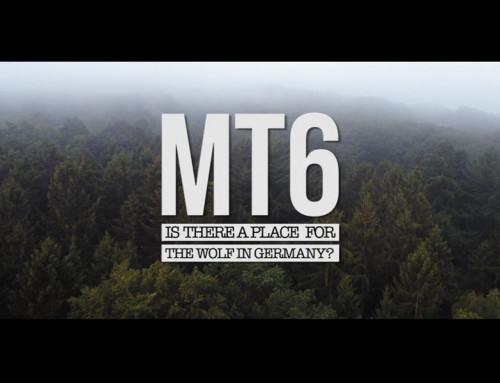 MT6 – Die Rückkehr des Wolfes | Dokumentarfilm